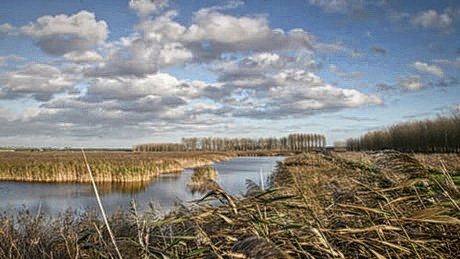 Lakenheath Fen